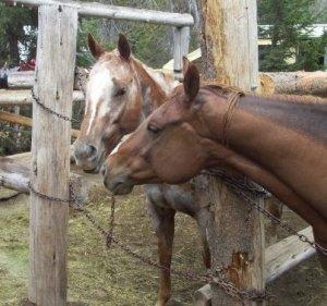Aimee's Horses